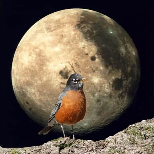 full-moon-in-march-2021-worm-moon