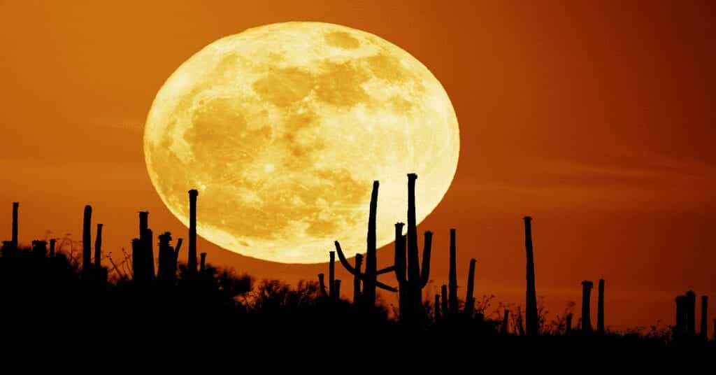 full-moon-in-march-2021-harvest-moon-southern-hemisphere