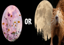 Full Moon November 2020 – Beaver Moon or Flower Moon?