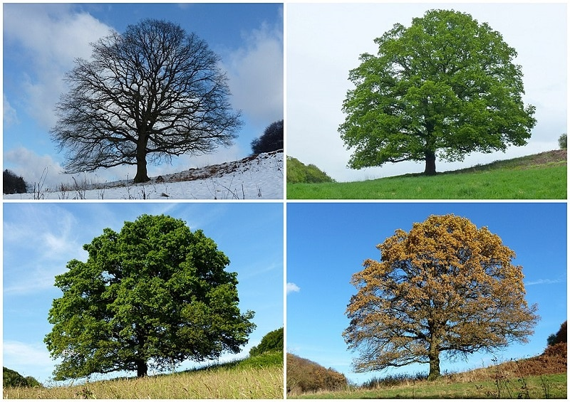 types-of-seasons-on-earth